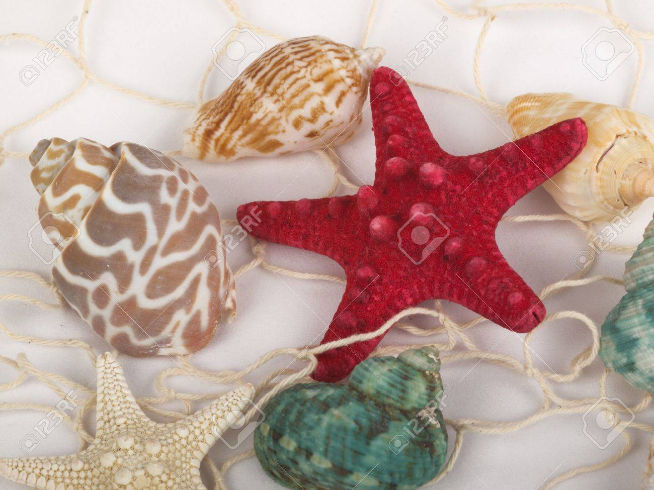 Decorative Fish Netting Seashells And Starfish Caught In A White Fishing Net For Use