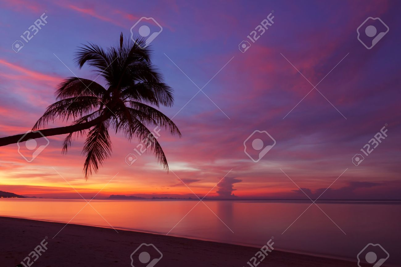 Tropical sunset with palm tree silhoette at beach stock photo tropical sunset with palm tree silhoette at beach stock photo 20324778 voltagebd Image collections