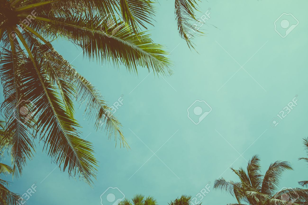 vintage toned palm tree over sky background stock photo picture