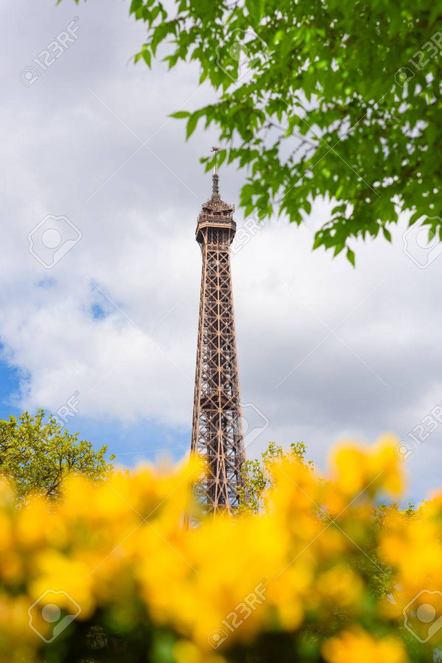 Eiffel Tower Through A Spring Yellow Flowers Bushes In Paris