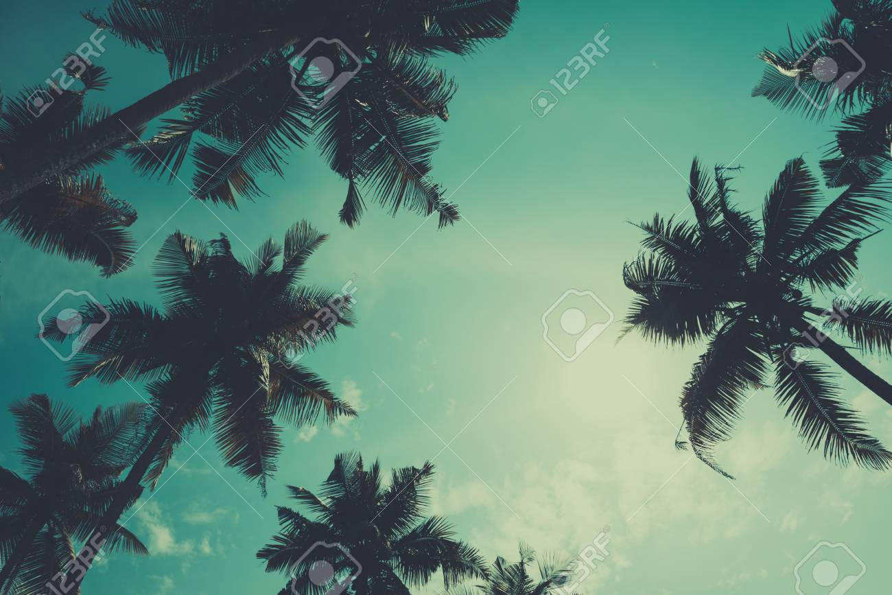 Palm Trees View From The Ground To The Top, Vintage Toned And ...