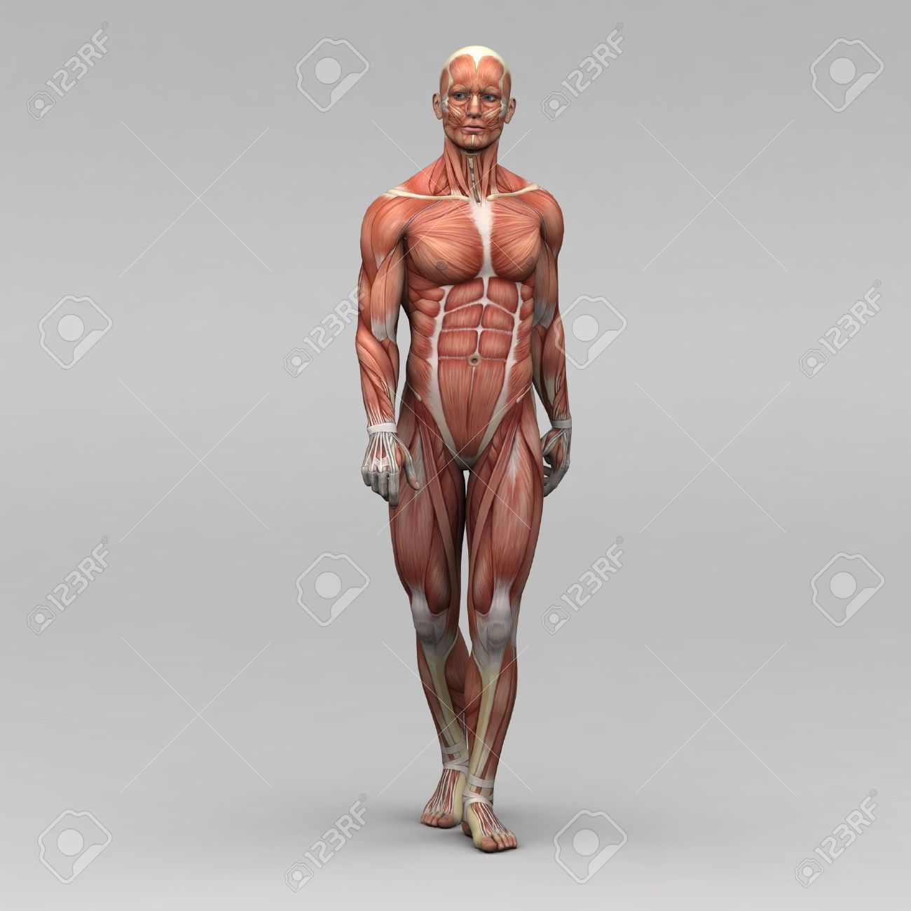 Athletisch Männlichen Menschlichen Anatomie Und Muskeln Lizenzfreie ...