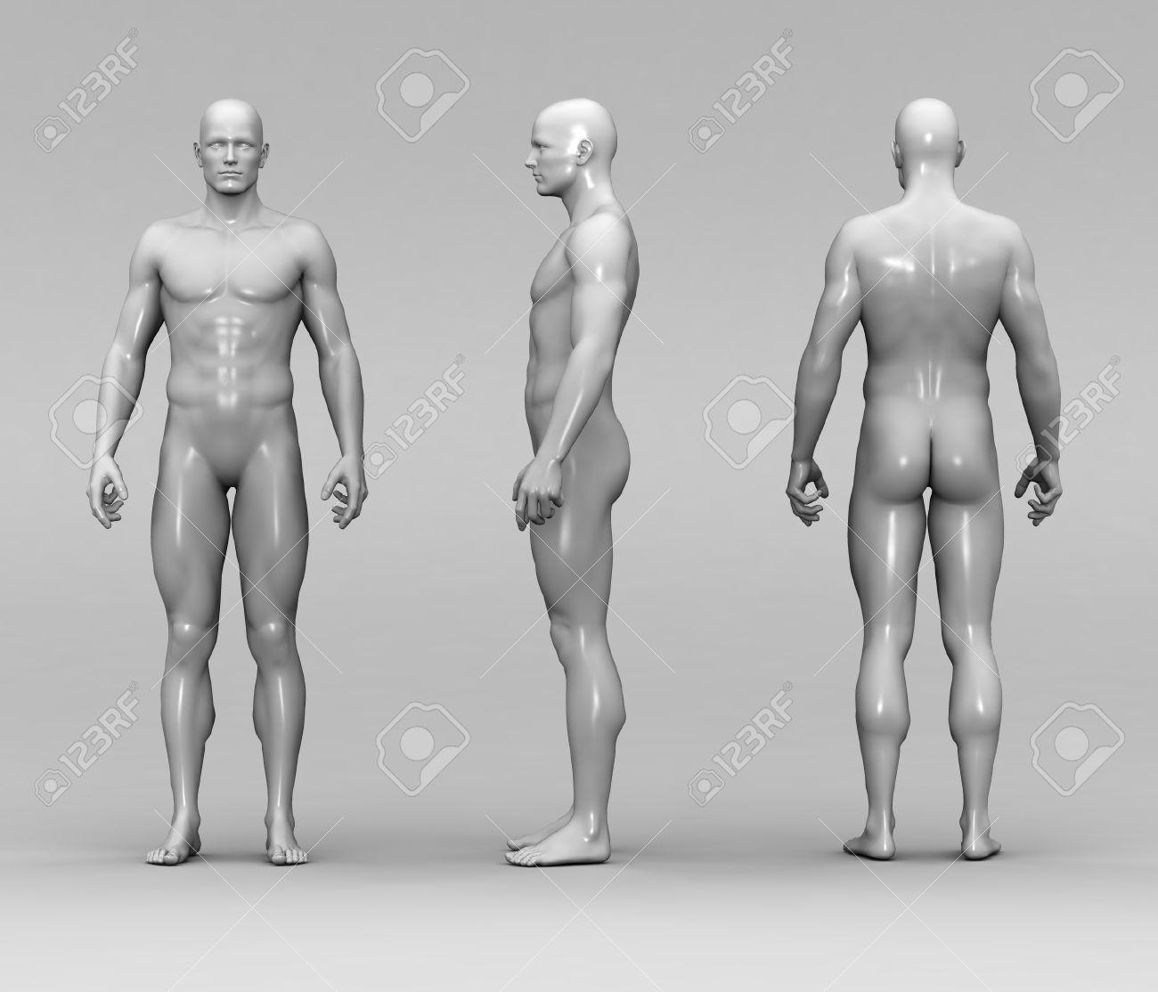 Athletisch Männlichen Menschlichen Anatomie Lizenzfreie Fotos ...
