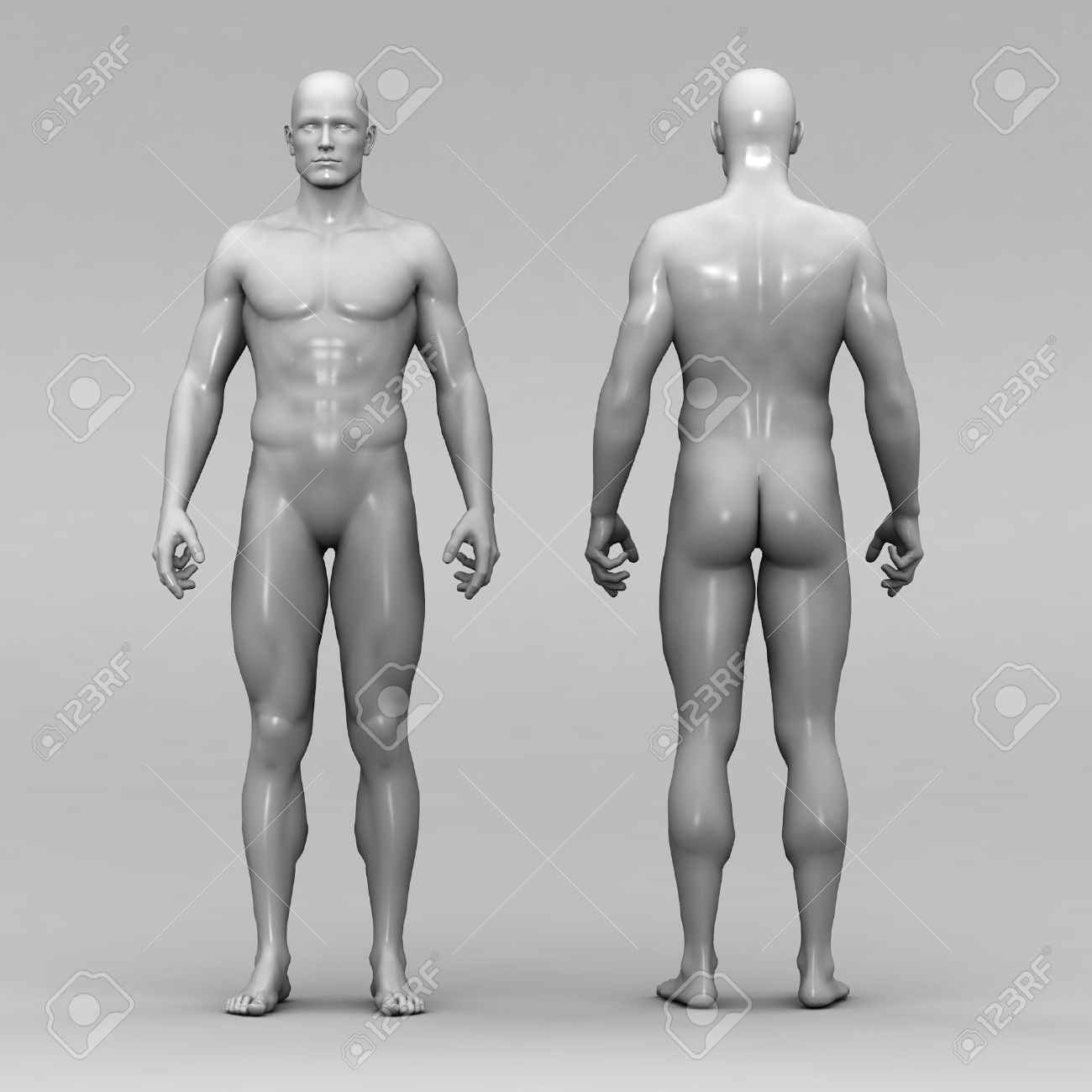 Athletic Male Human Anatomy Stock Photo, Picture And Royalty Free ...