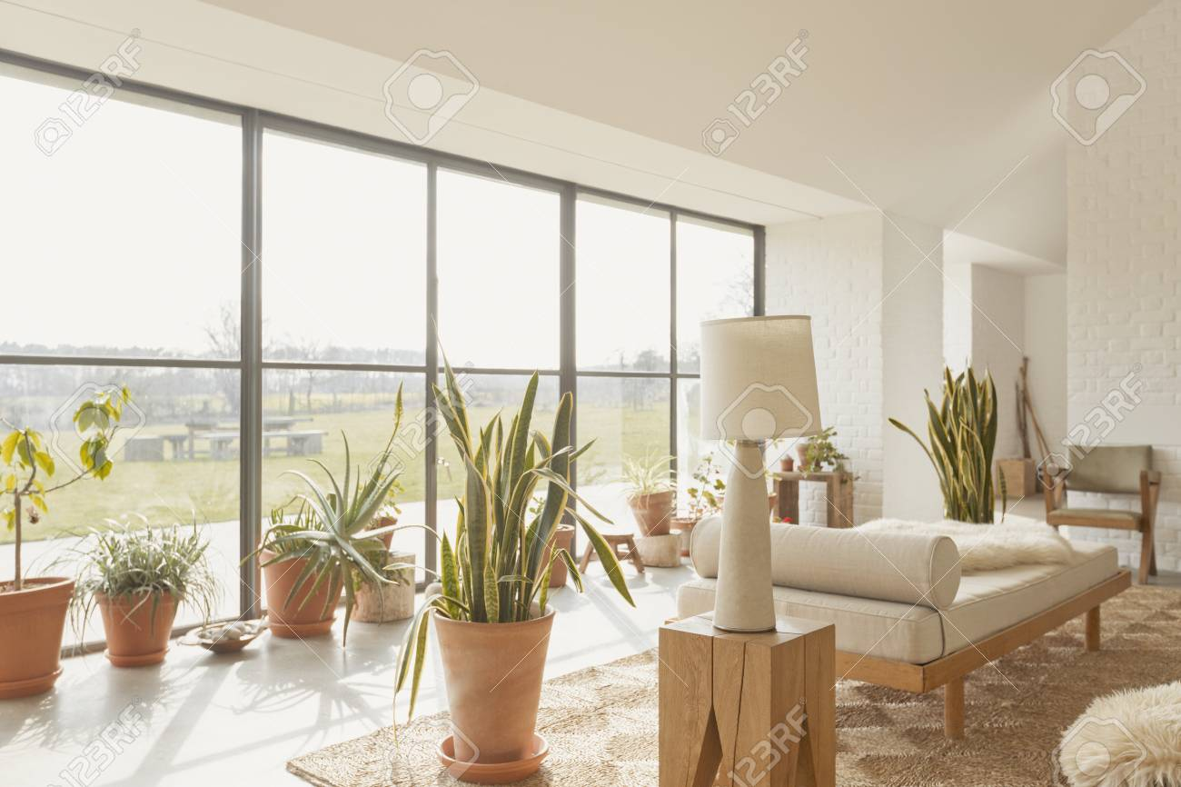 Potted Plants In Sunny Home Showcase Living Room Stock Photo ...