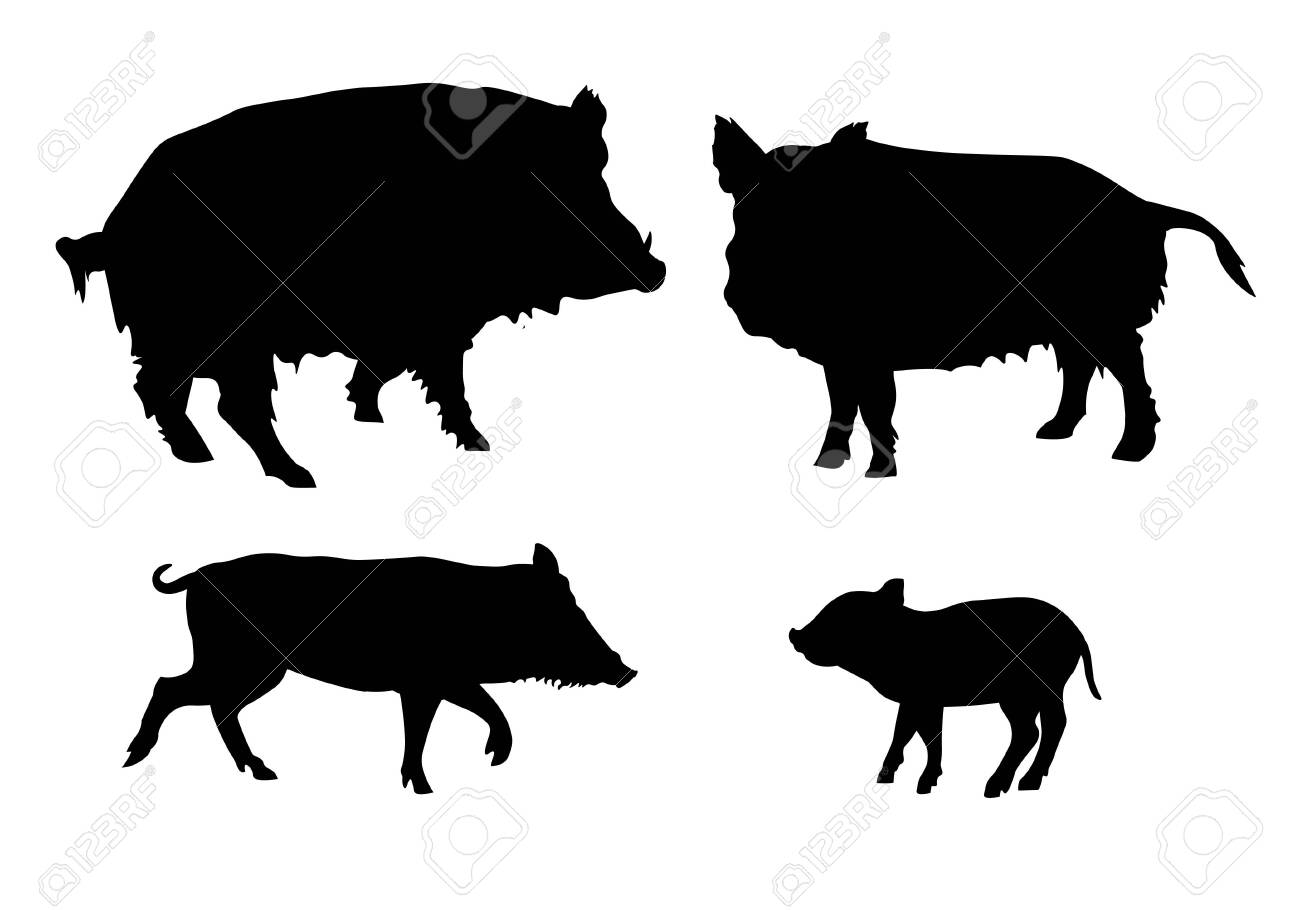 Set of silhouettes of wild pigs. Vector illustration isolated on white background - 133432076