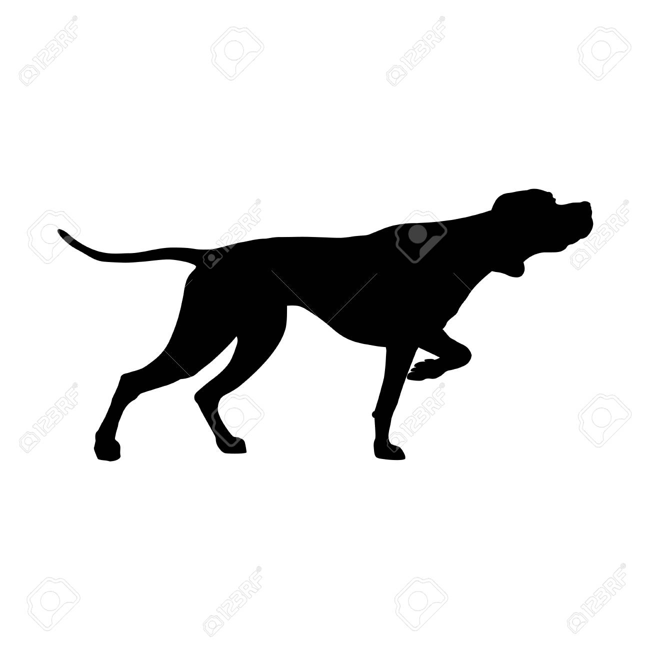Silhouette of English pointer. Gun dog breed. Vector illustration isolated on the white background - 116469625
