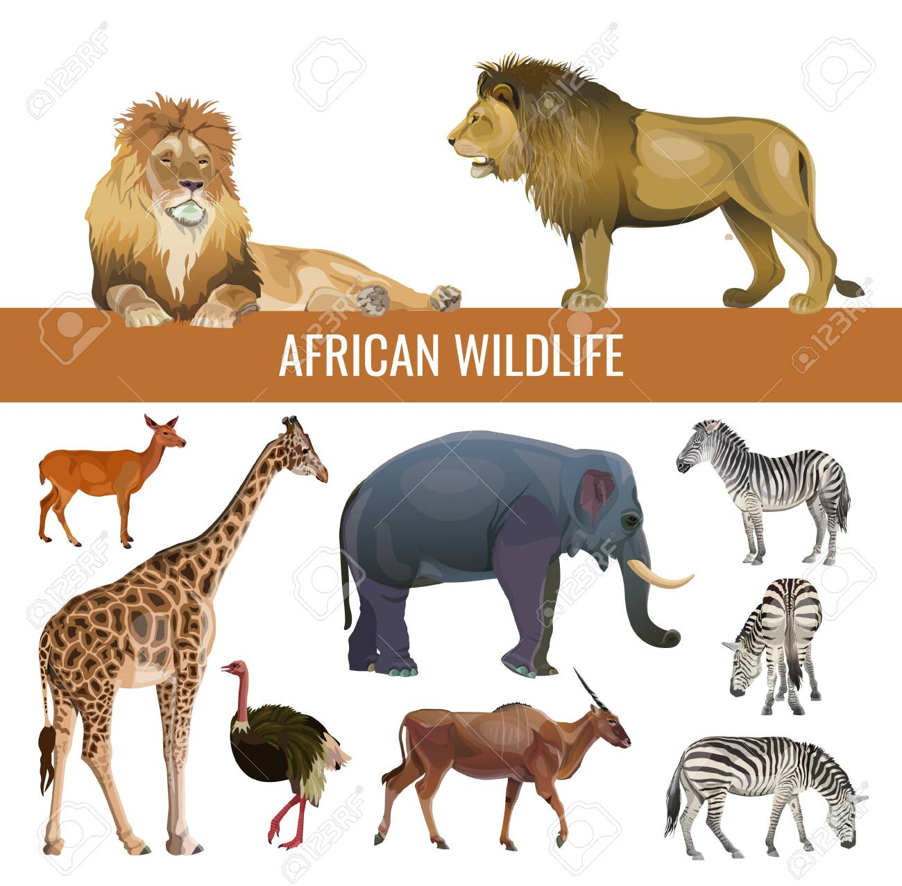 African wildlife: lions, zebras, antelopes, elephant, giraffe and ostrich. Vector illustration isolated on white background - 132473671