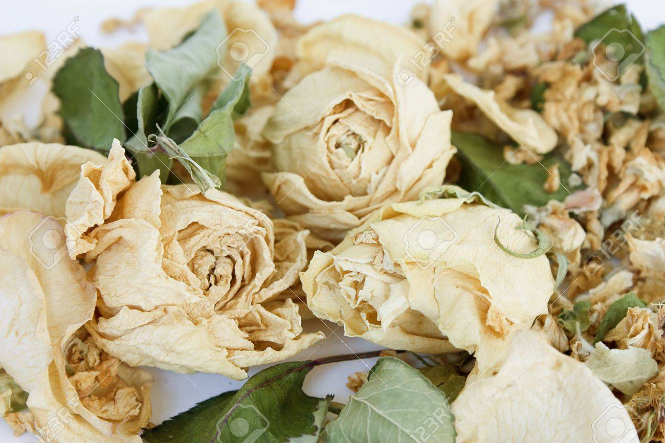 Dried White Roses On White Background Stock Photo Picture And
