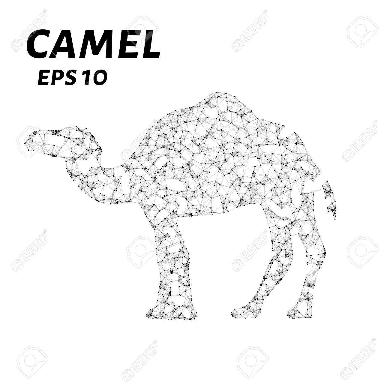 Camel consists of points, lines and triangles  The polygon shape