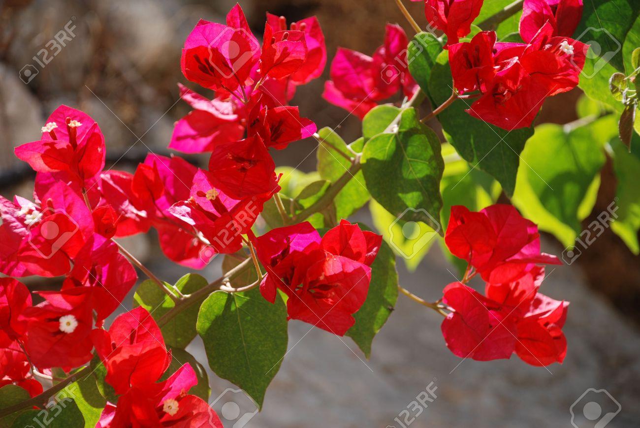 Pretty red flower images flower decoration ideas pretty red flower image collections flower decoration ideas pretty red flowers on a plant at emborio mightylinksfo