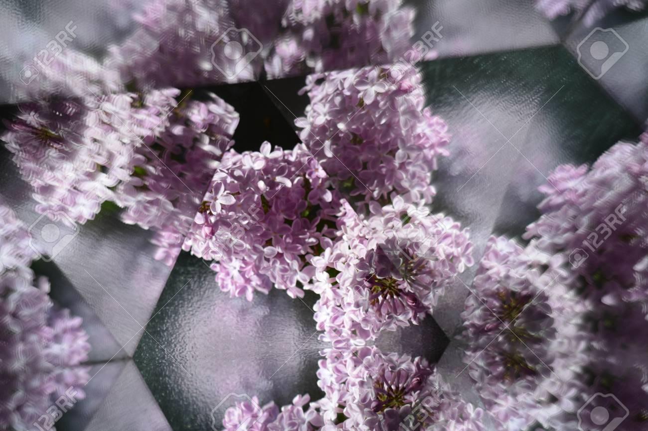 Fond Naturel Abstrait Effet Kaleidoscope Fleur Lilas Banque D