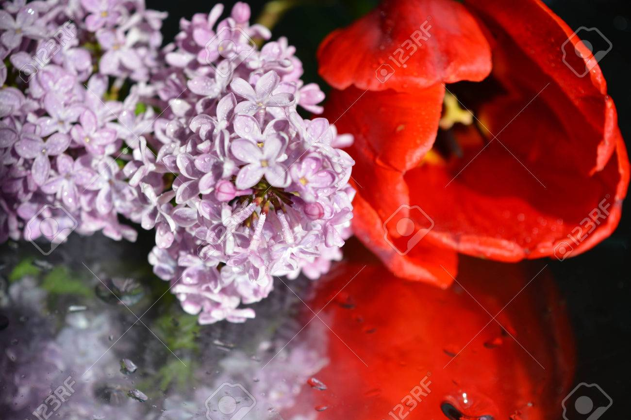 Beautiful flowers with reflection tulips and lilacs stock photo beautiful flowers with reflection tulips and lilacs stock photo 75198050 izmirmasajfo
