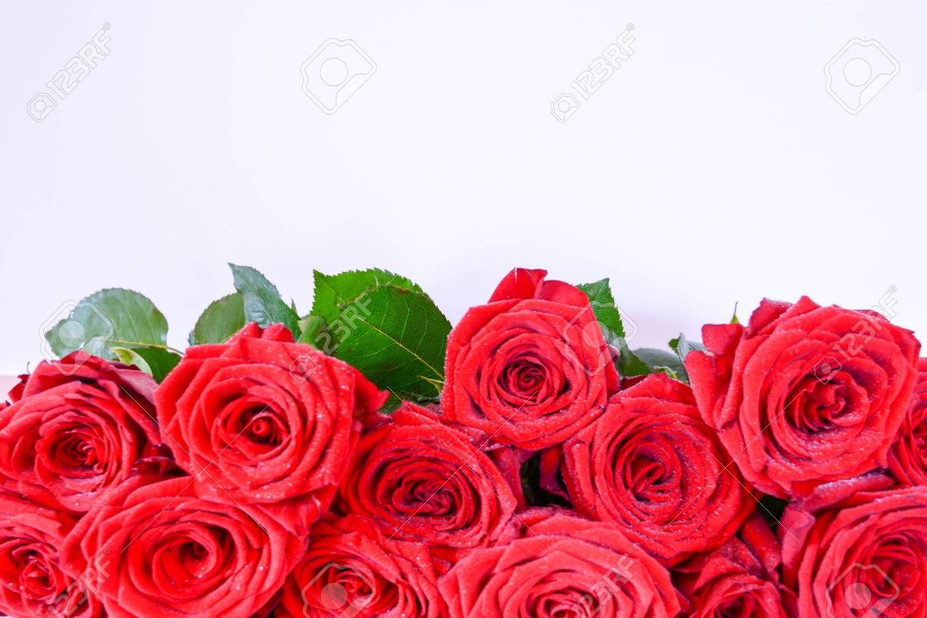 Natural background red roses beautiful flowers leaves stock photo natural background red roses beautiful flowers leaves stock photo 76391235 izmirmasajfo