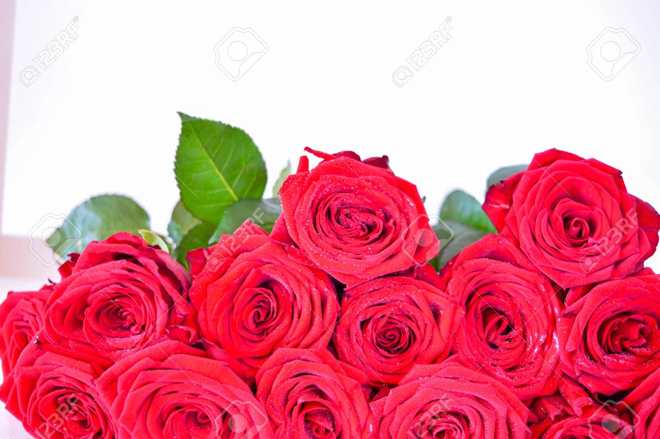 Natural background red roses beautiful flowers leaves stock photo natural background red roses beautiful flowers leaves stock photo 77537213 izmirmasajfo