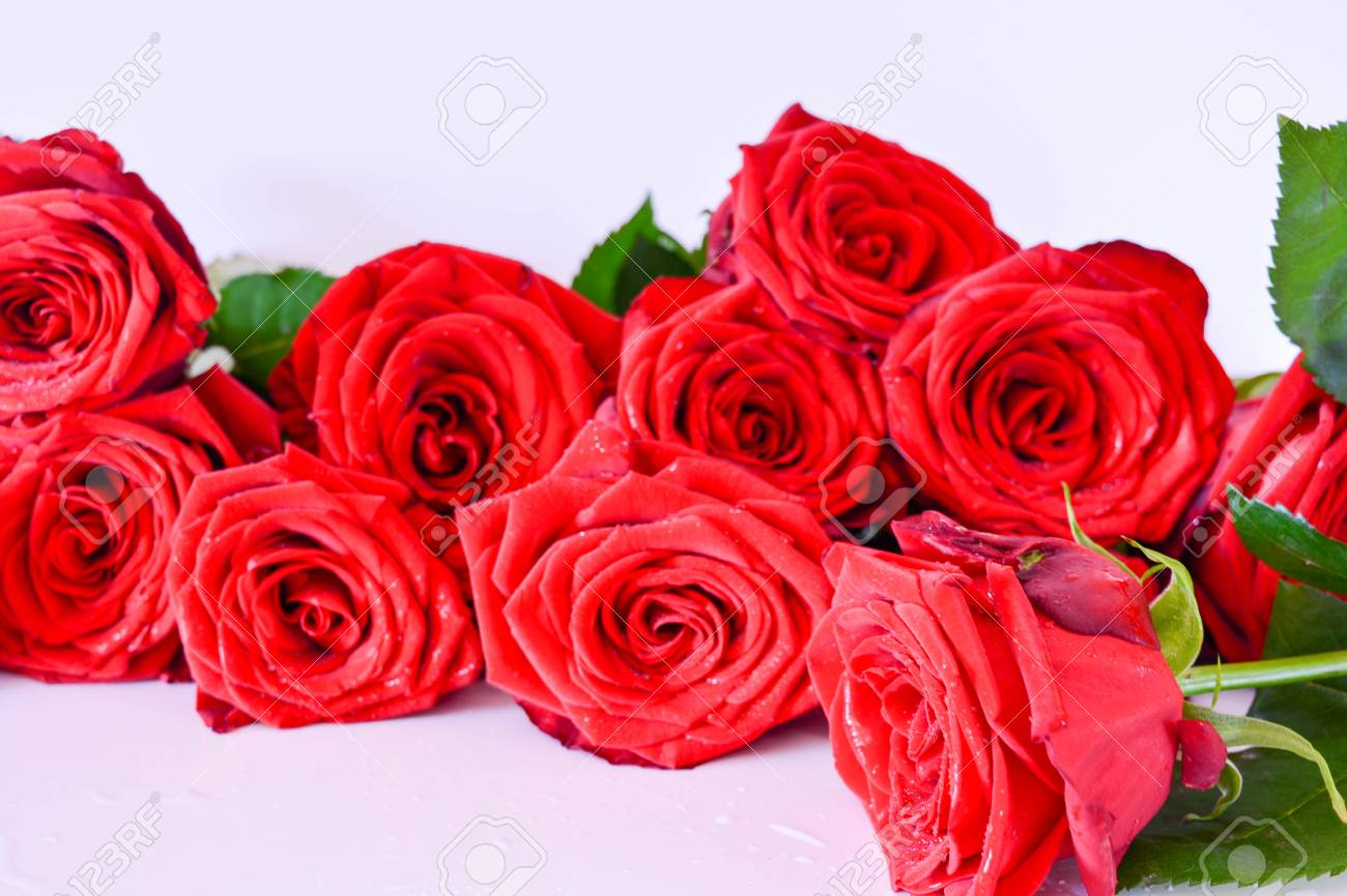 Natural background red roses beautiful flowers leaves stock photo natural background red roses beautiful flowers leaves stock photo 77897090 izmirmasajfo