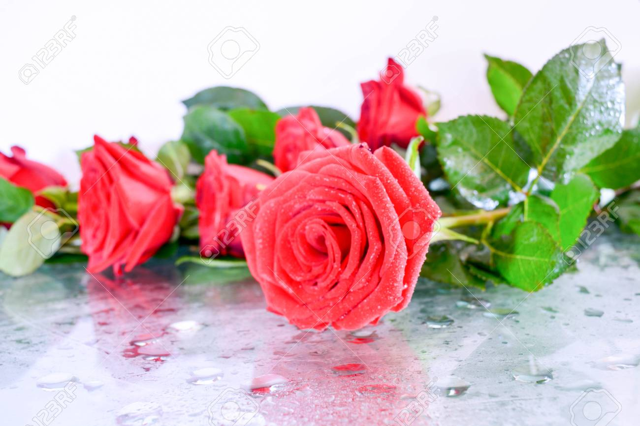 Natural background, red roses, beautiful flowers, leaves