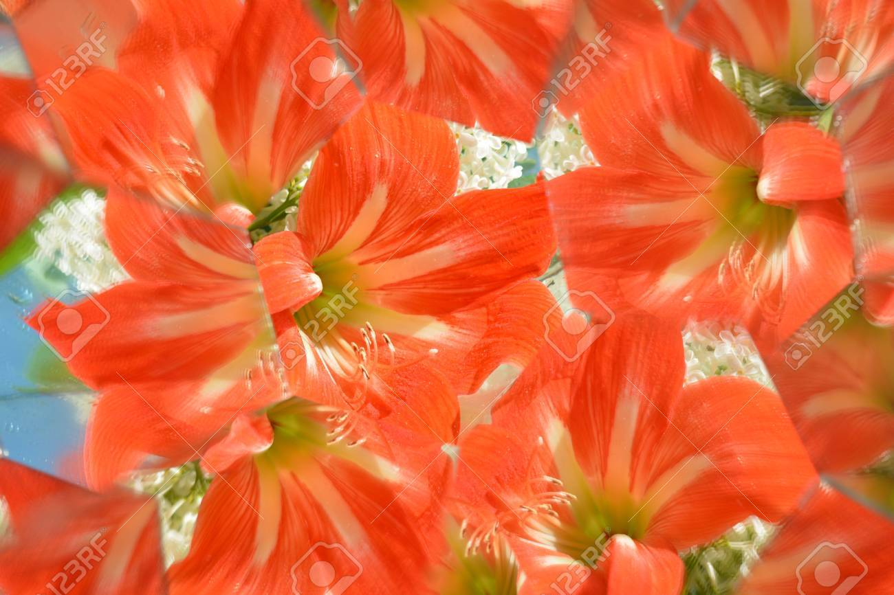 Abstract background beautiful flowers nature kaleidoscope stock abstract background beautiful flowers nature kaleidoscope ef stock photo 78140985 izmirmasajfo
