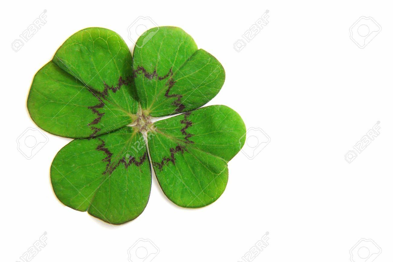 Clover Stock Photo - 12624473