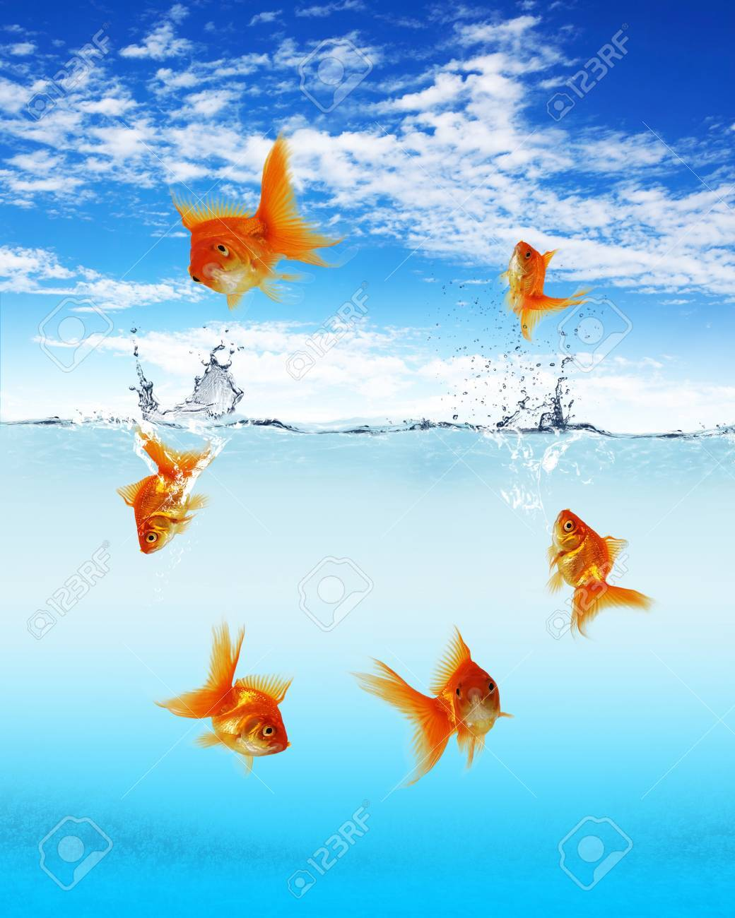 Collage of swimming gold fish and money symbols Stock Photo - 13196992