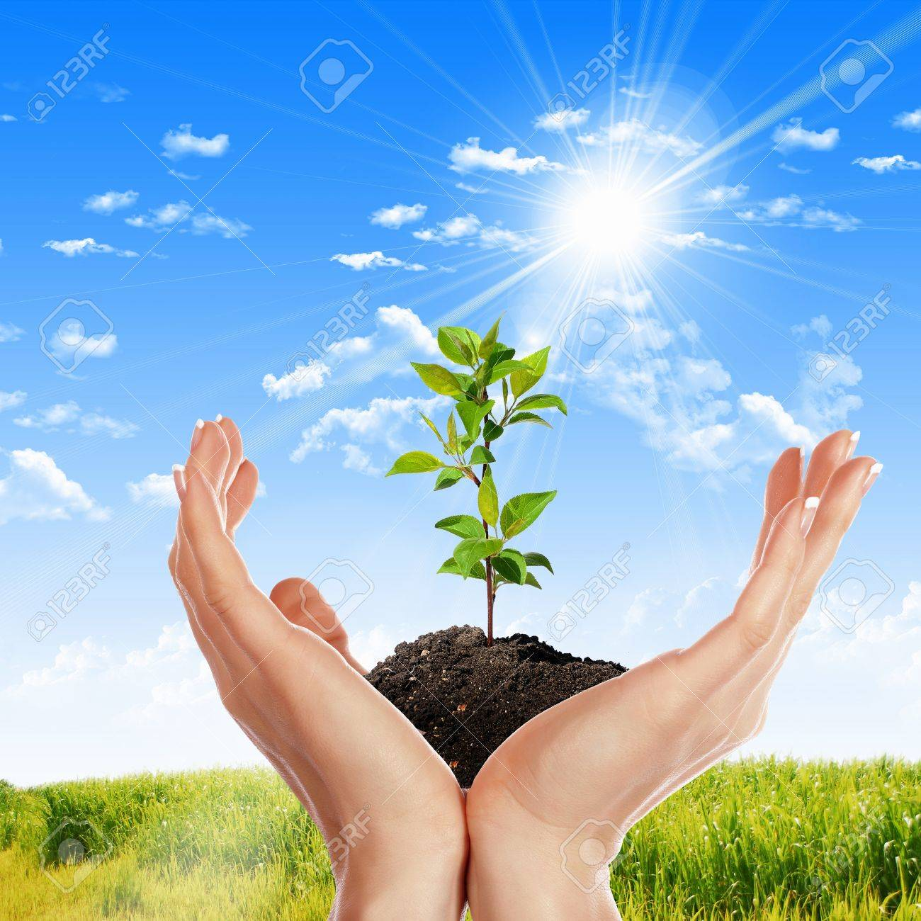 Hands holding green sprouts and sunny sky Stock Photo - 14107077