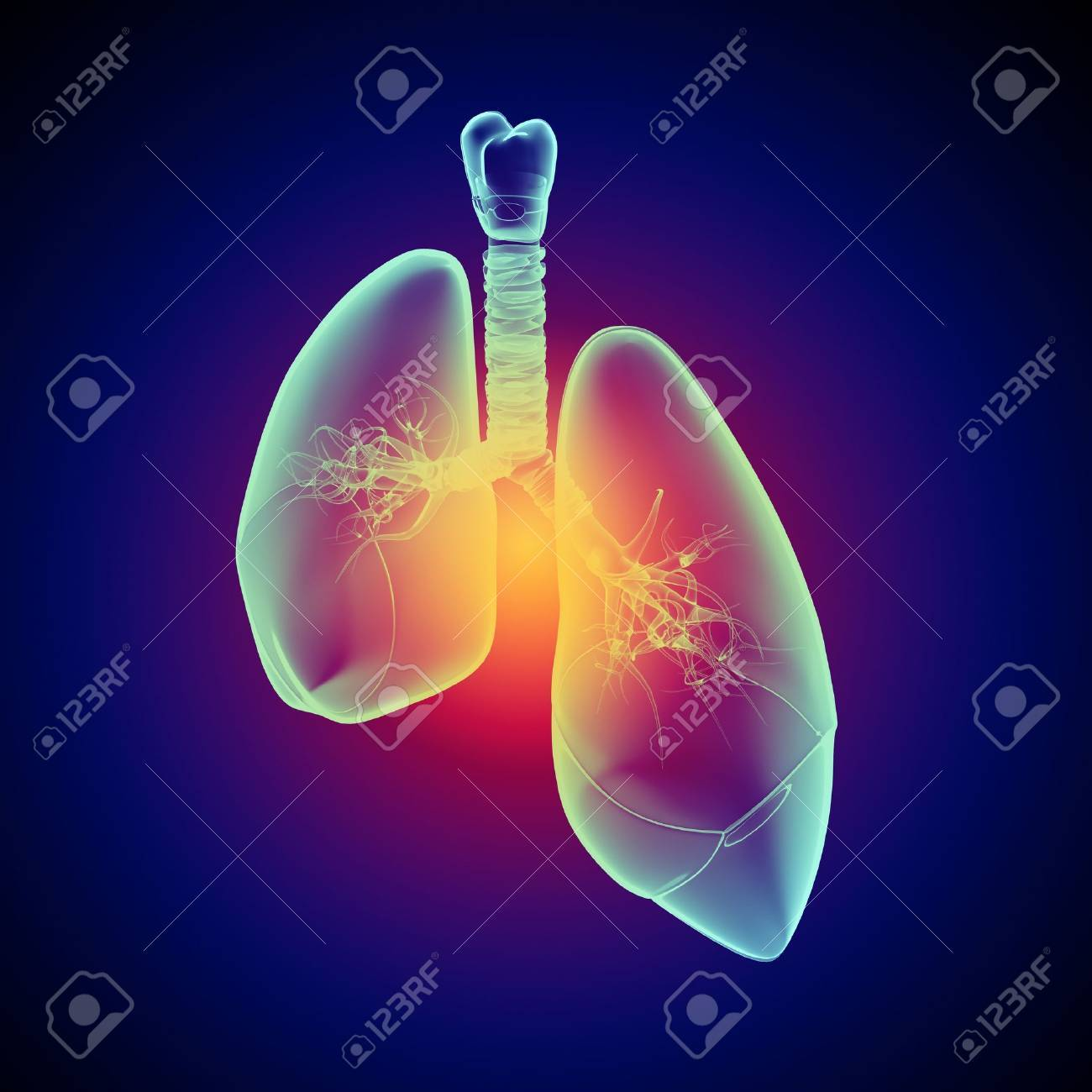 Schematic illustration of human lungs with the different elements on a colored background  Collage Stock Illustration - 18747364