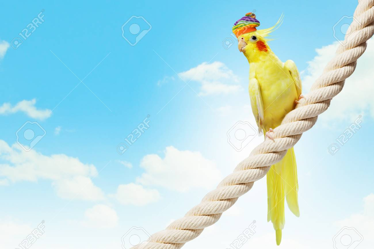Image of funny parrot in hat sitting on rope Stock Photo - 20659586