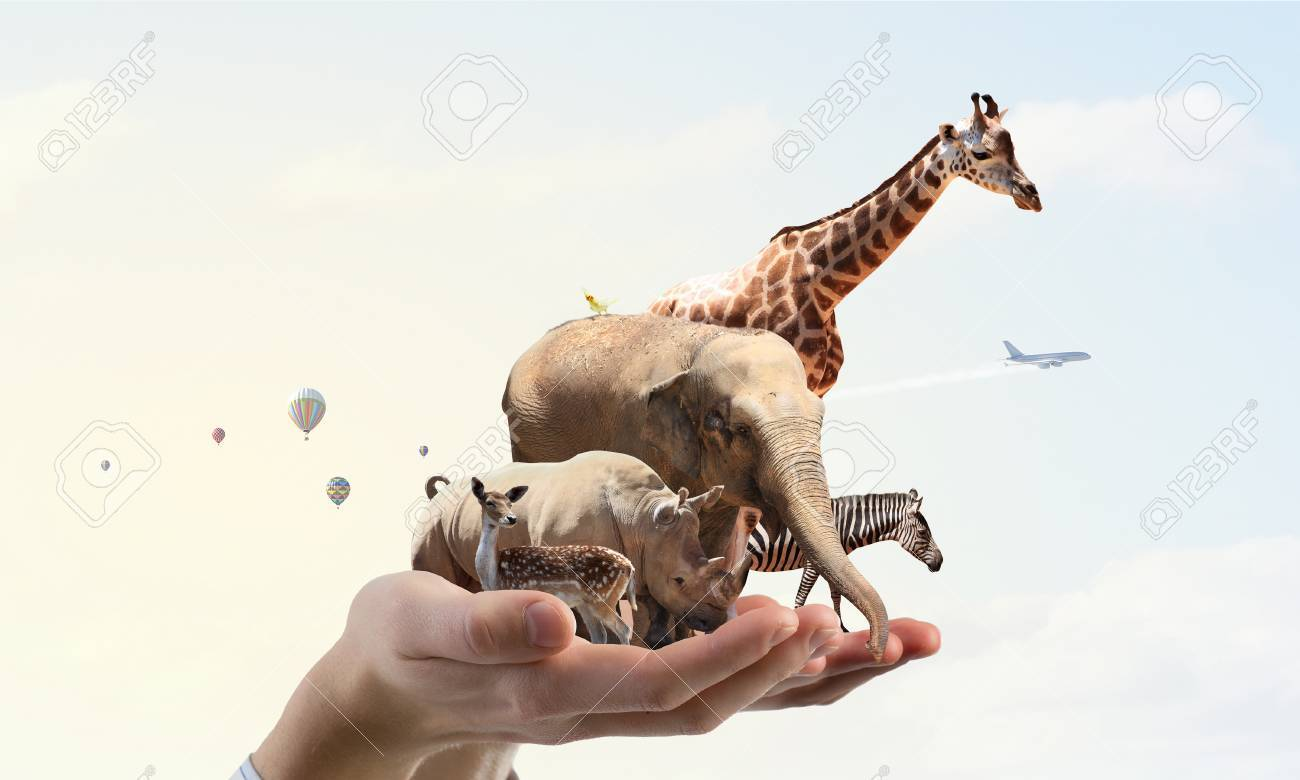 Group of zoo animals together in palm - 66789589
