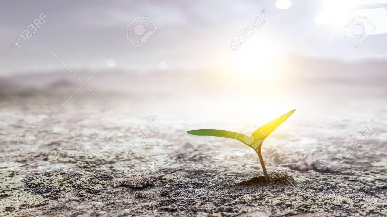 Seeding plant on the ground - 121614788