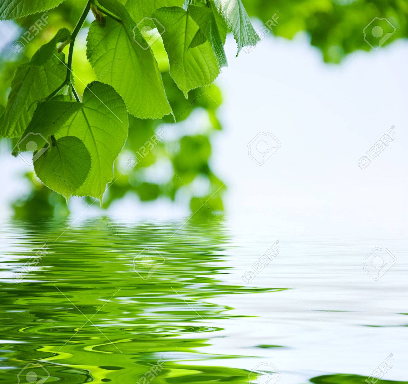 nature background - Leaves and water reflection - 29795856