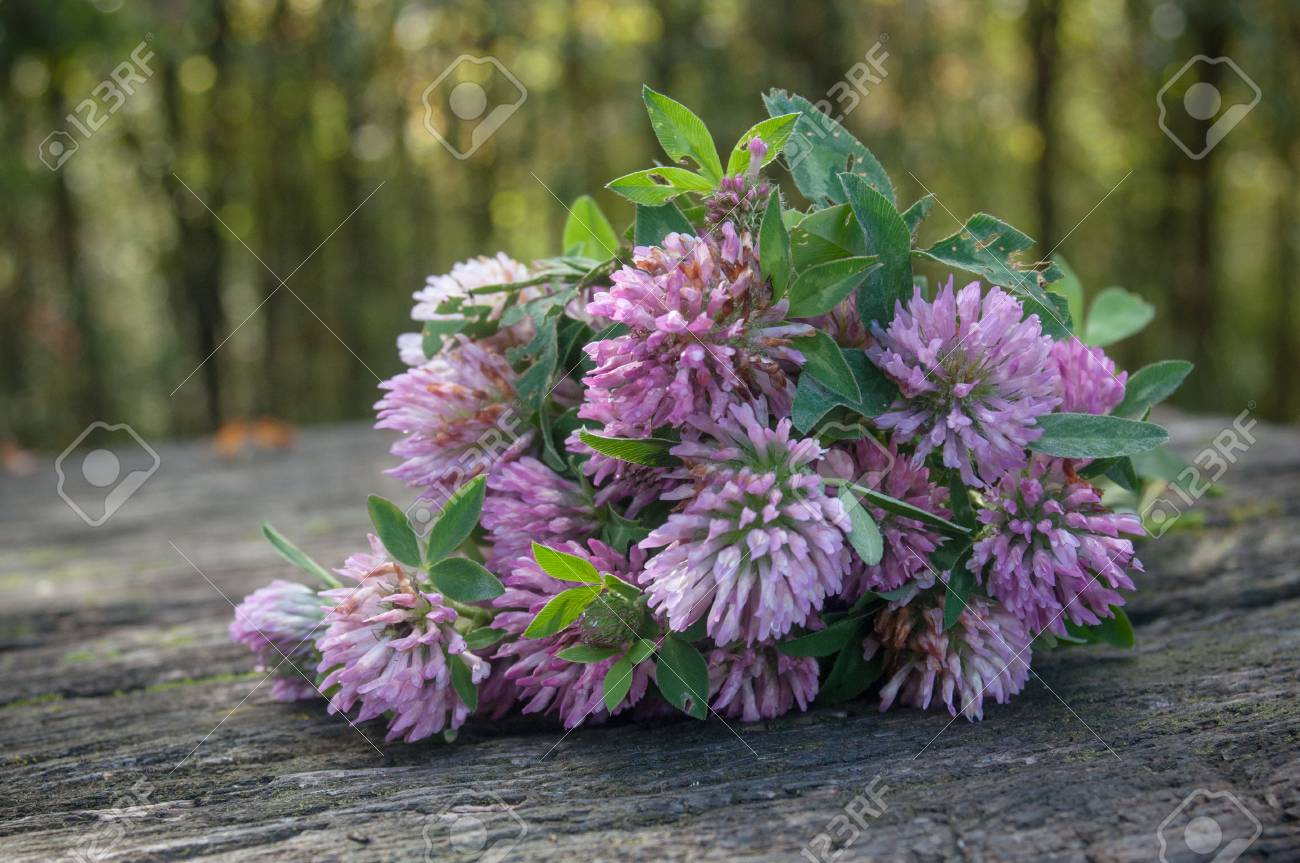 Closeup Of Bouquet Of Purple Clover Flower On Wooden Table Stock