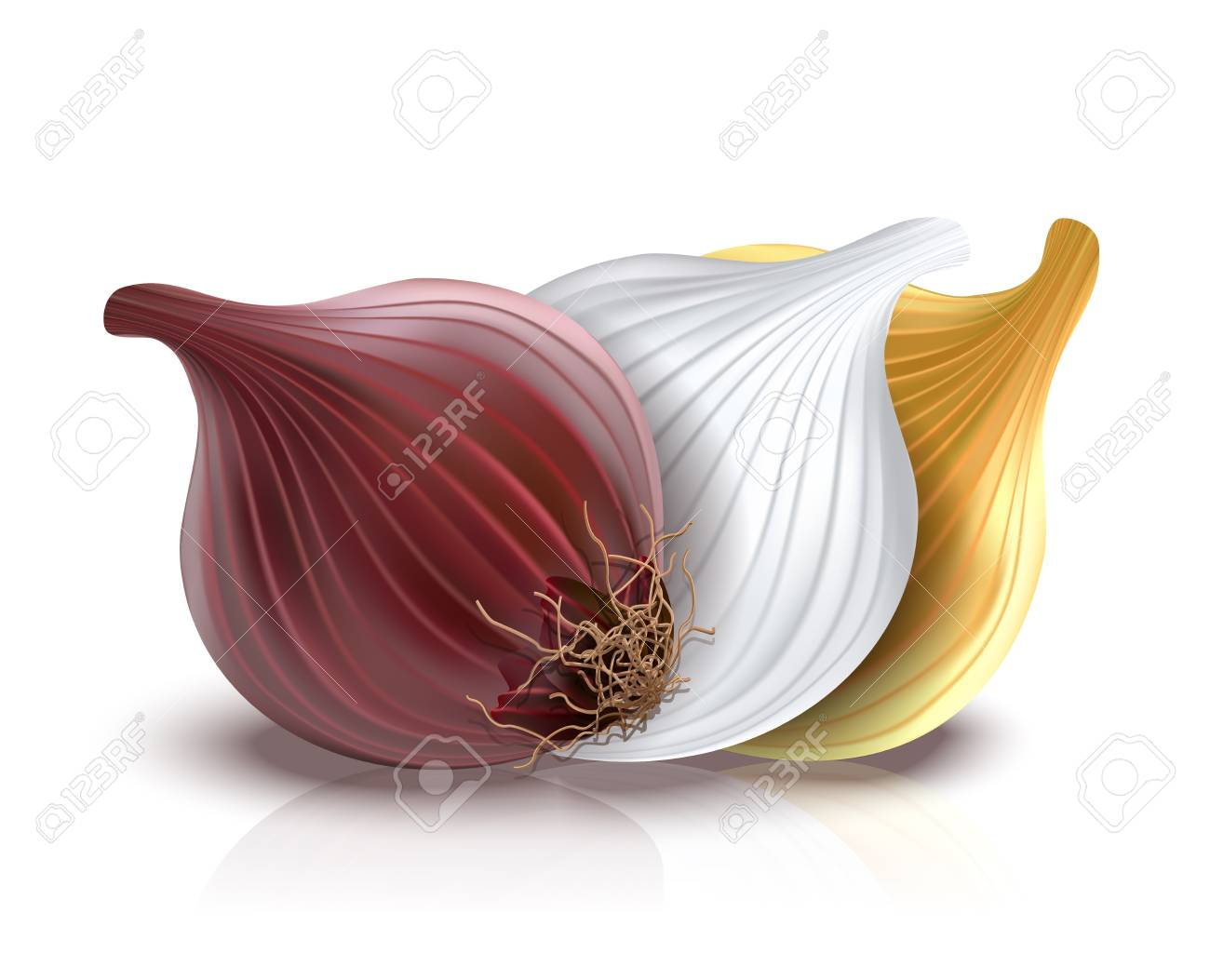 red, gold and white onions Stock Vector - 11978405