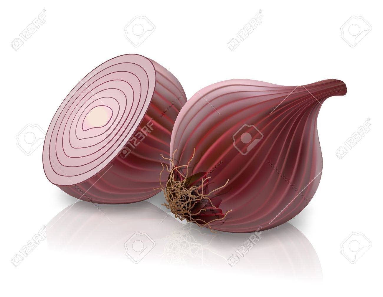 red onion Stock Vector - 12107755