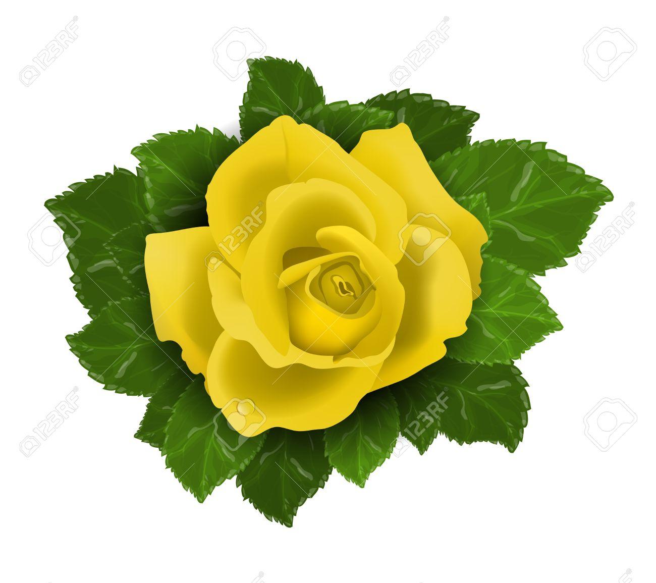 vector fleur rose jaune avec des feuilles isolées sur fond blanc