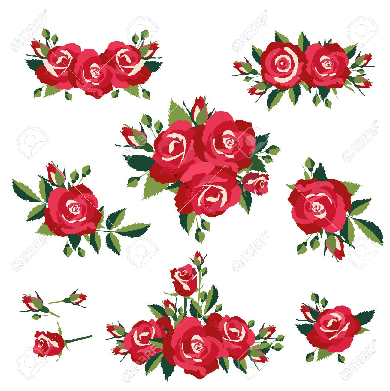 inflorescence or bouquets of roses on white background vector illustration Stock Vector - 26471843