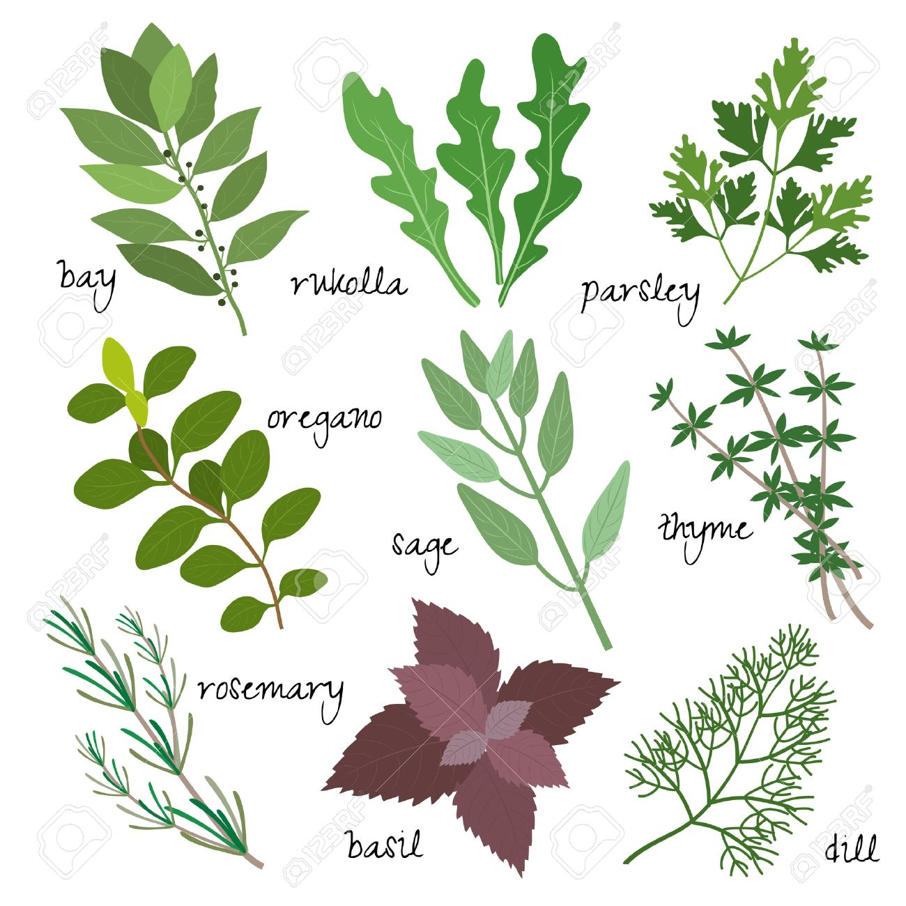 Healing, Medicinal And Fragrant Herbs Royalty Free Cliparts ...