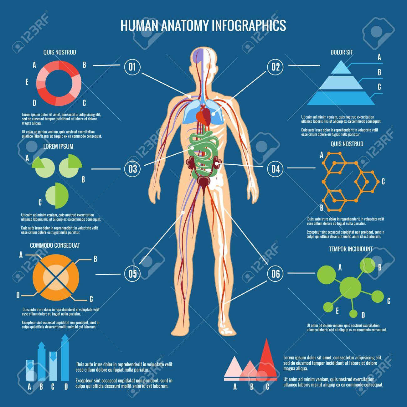 Color Del Cuerpo Humano Anatomía Infografía Diseño En Fondo Verde ...