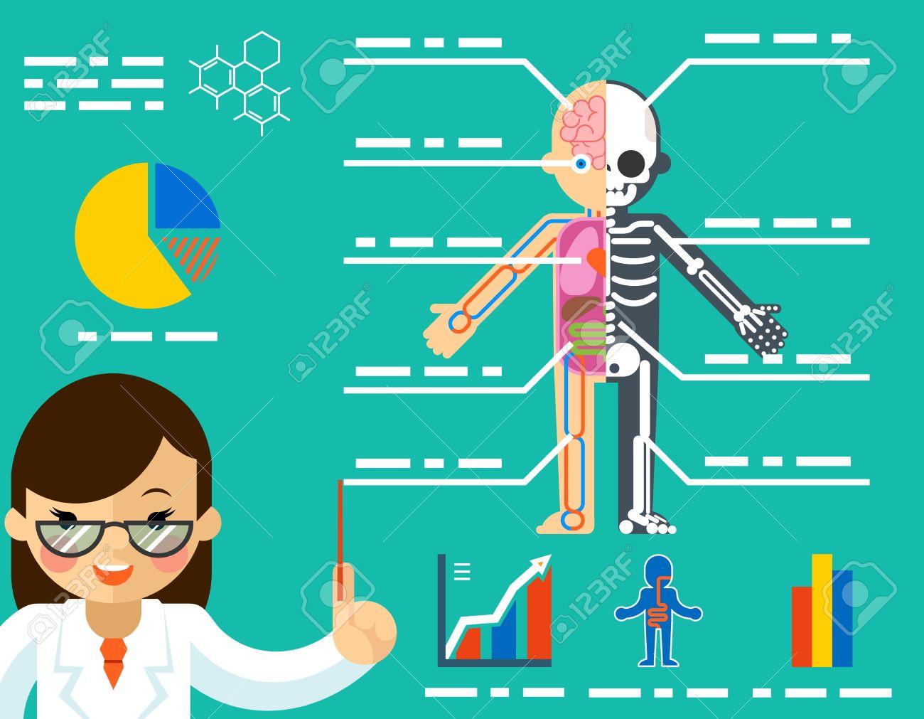 Concepto Médico. Mujer Del Doctor Que Muestra La Anatomía. Ciencias ...