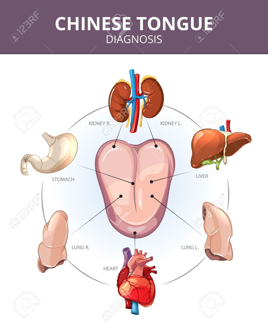 Chinese Tongue Diagnosis Internal Organs Projections Stomach