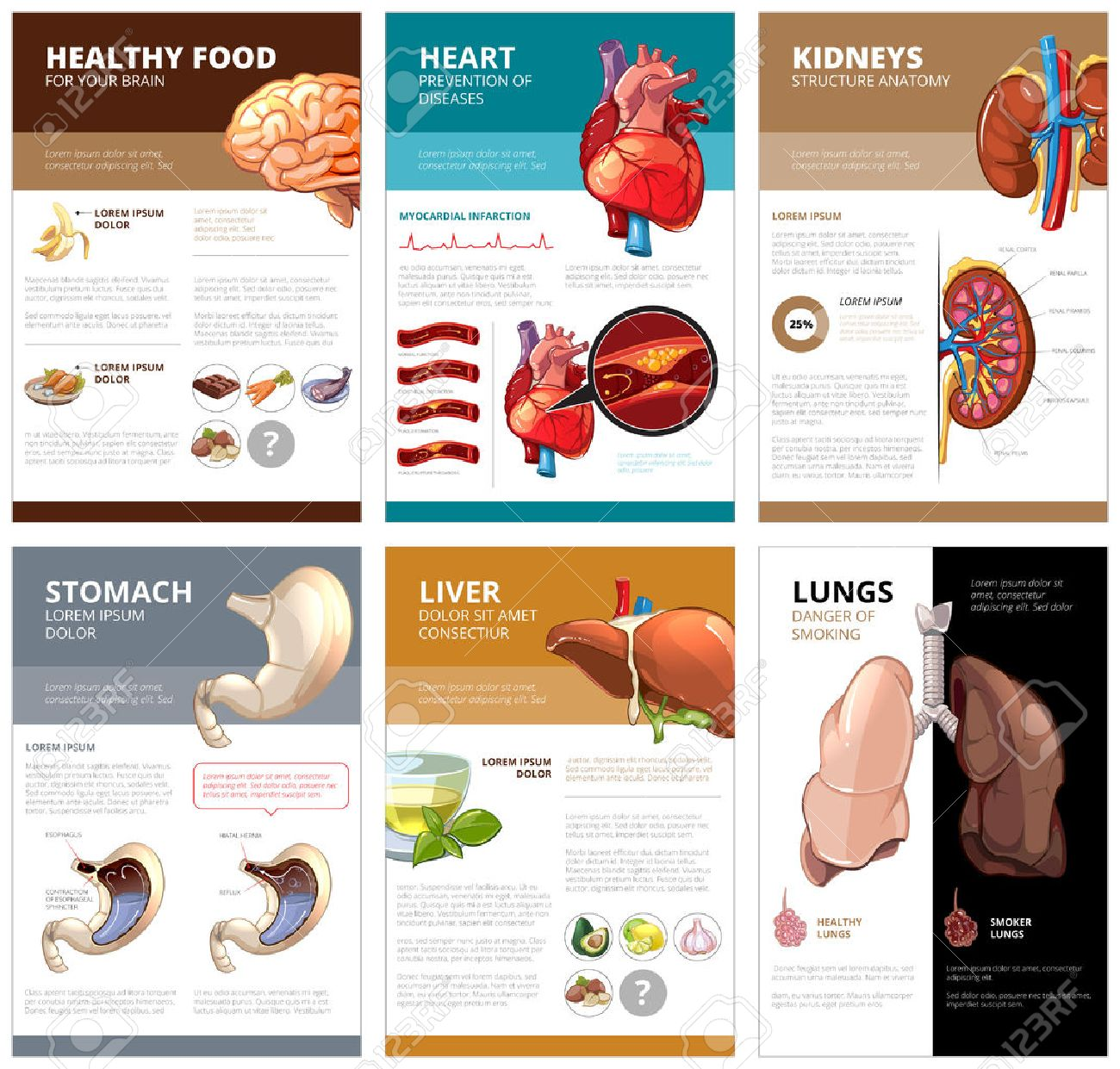 Internal human organs chart diagram infographic brain and heart internal human organs chart diagram infographic brain and heart liver and stomach lung ccuart Gallery