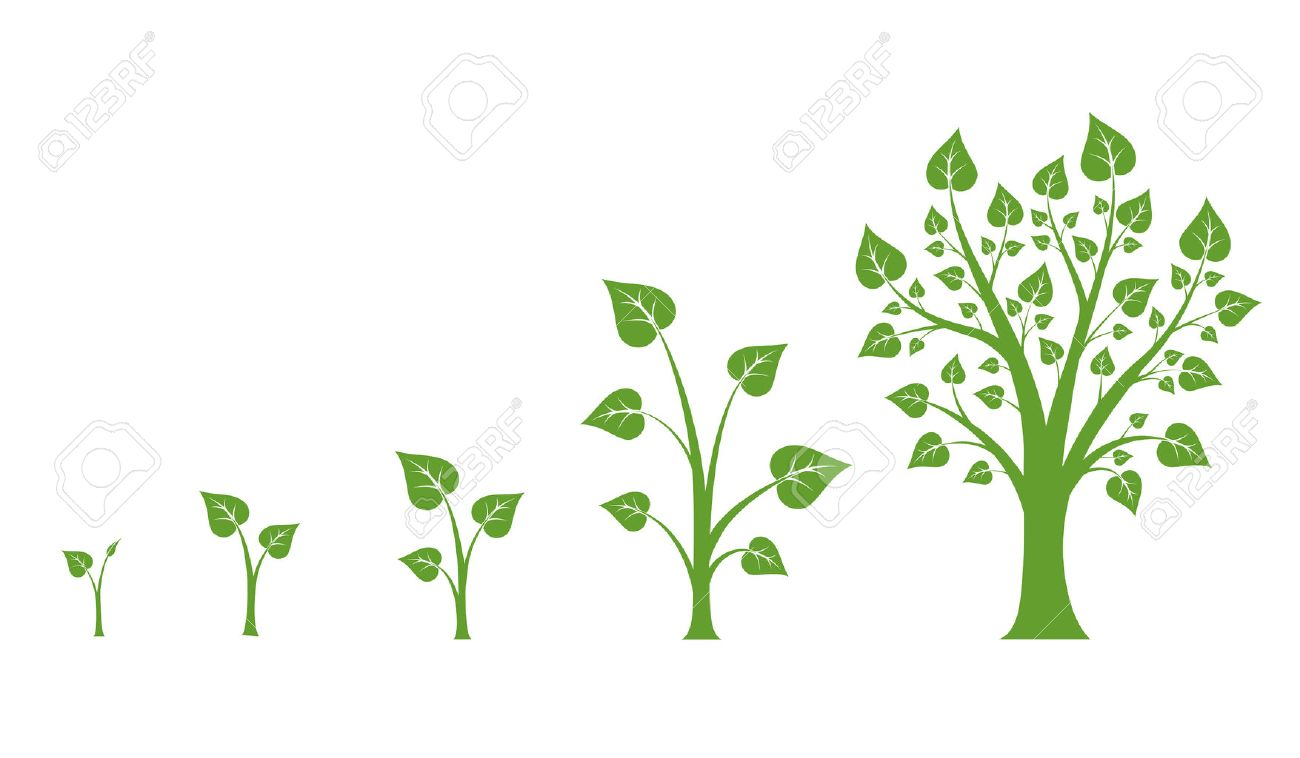 Tree growth vector diagram. Green tree growth, nature leaf growth, plant growh illustration - 52208676