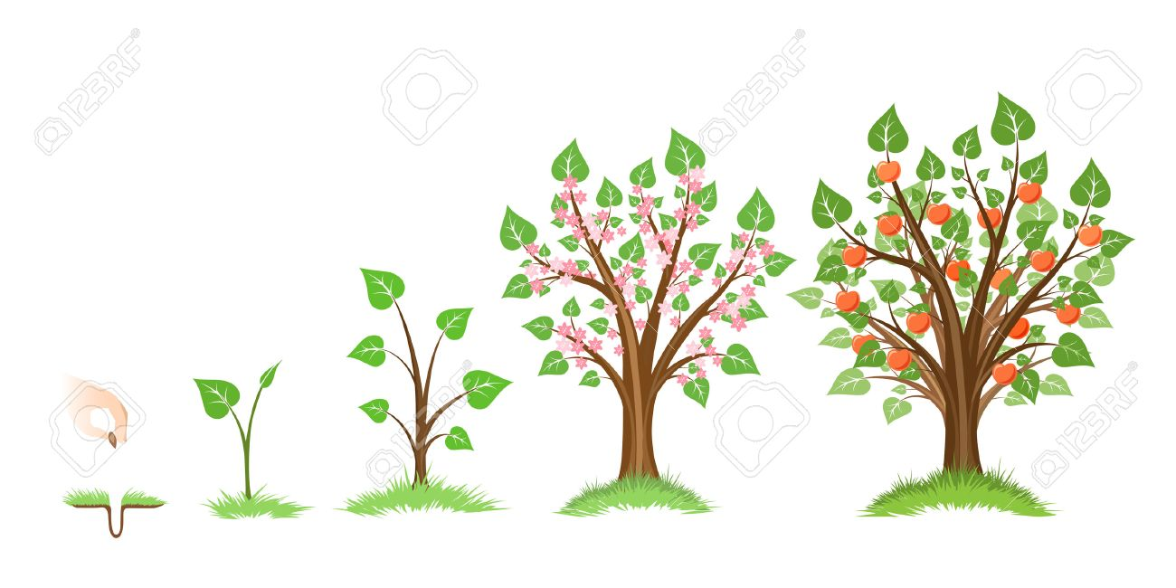 Apple tree growth cycle. Tree plant apple, cycle botanical, gardening growth fruit, natural apple, crop food, vector illustration - 54992591