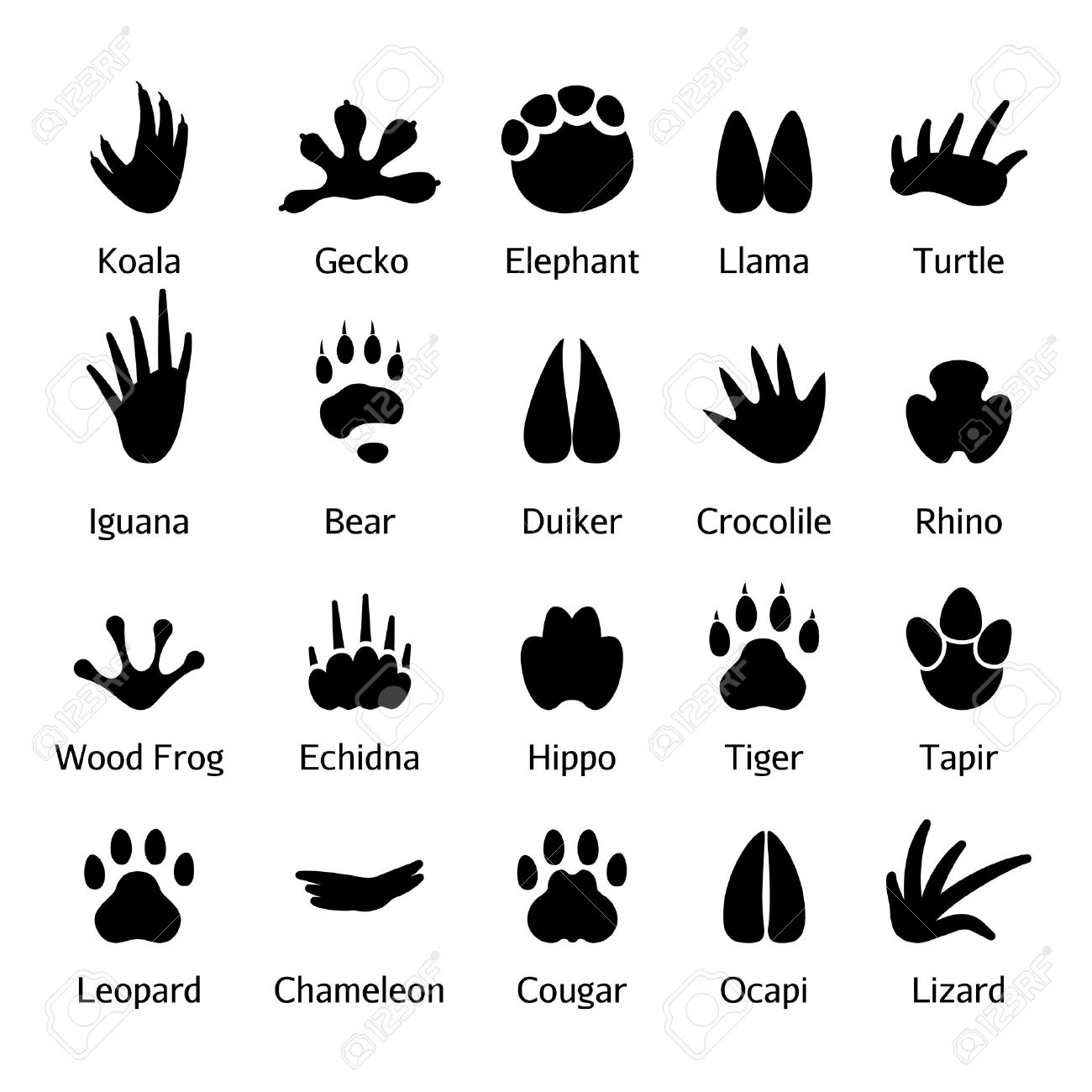動物や爬虫類の足跡ベクトル。足を踏み入れた野生動物、黒いシルエットの