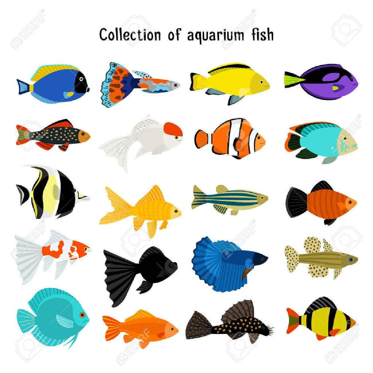 水族館の魚を設定します。 水中ダイビング、白い背景で隔離の魚。色の海