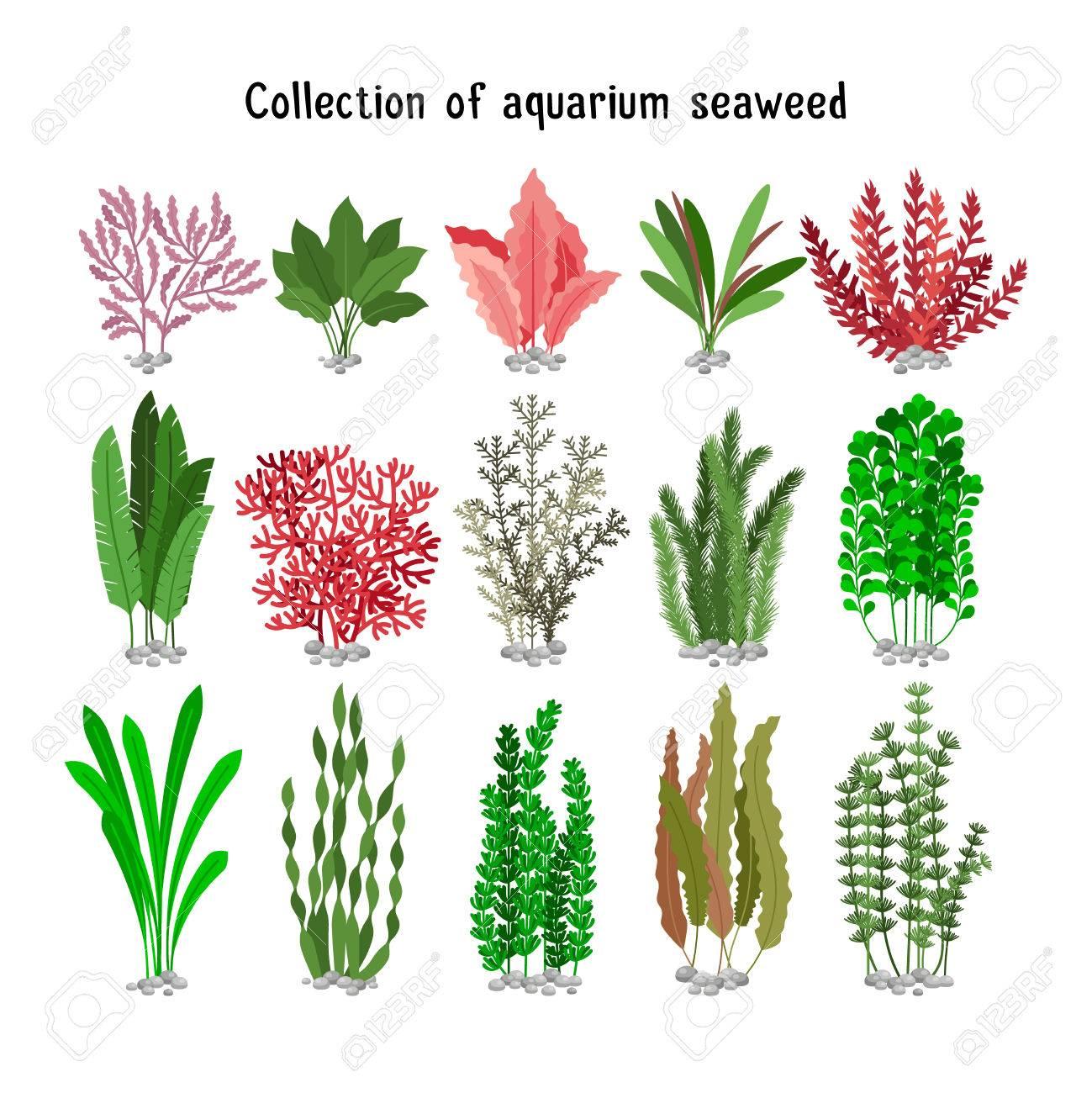 Seaweed set vector illustration. Yellow and brown, red and green aquarium seaweeds biodiversity isolated on white. Sea plants and aquatic marine algae - 69581598