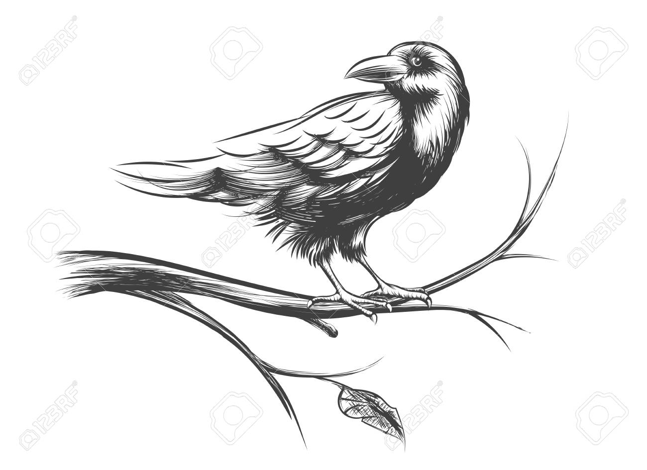 Raven or black crow sketches and silhouettes vector set animal