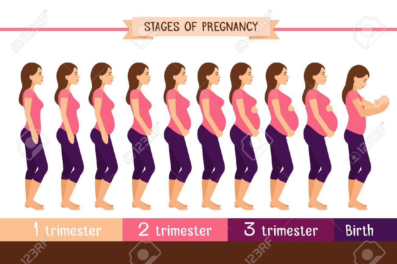 192e585ad Embarazo Etapas de ilustración vectorial plana. La mujer embarazada y el recién  nacido al nacer