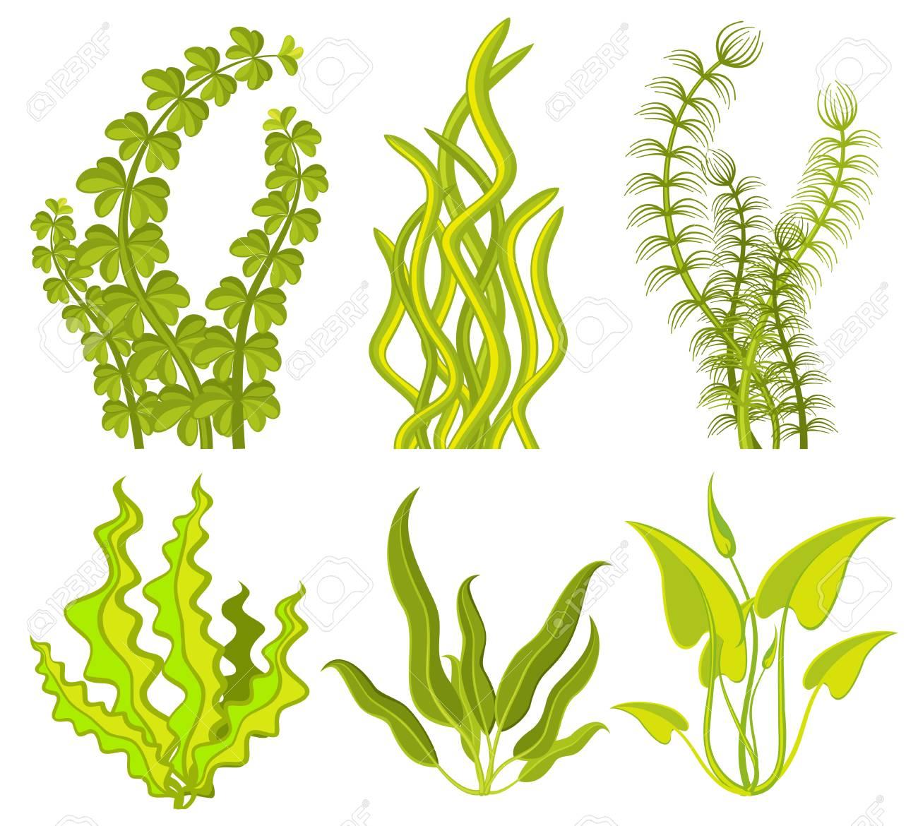 underwater seaweed vector elements royalty free cliparts vectors rh 123rf com seaweed vector images seaweed vector background