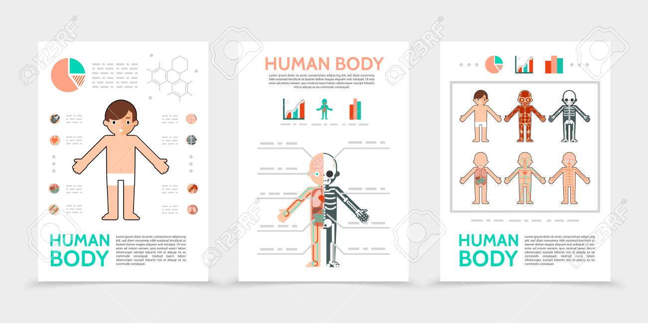 Flat Human Body Posters With Internal Organs Muscular Skeletal ...