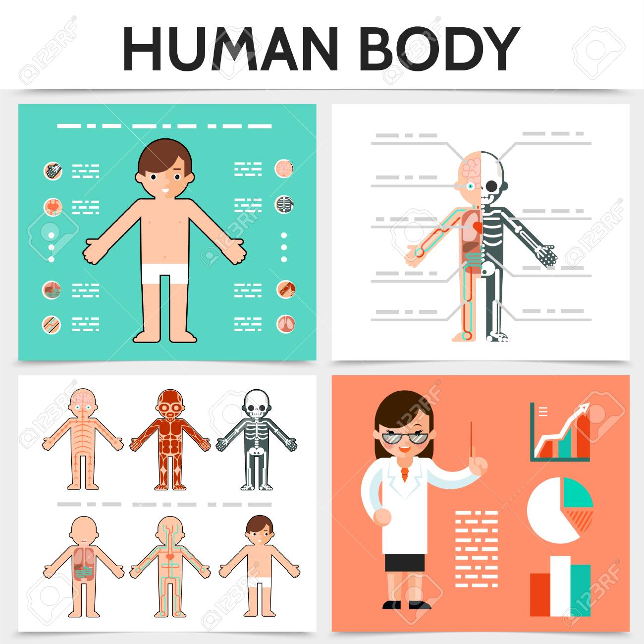 Flat Human Anatomy Square Concept With Internal Organs Skeletal